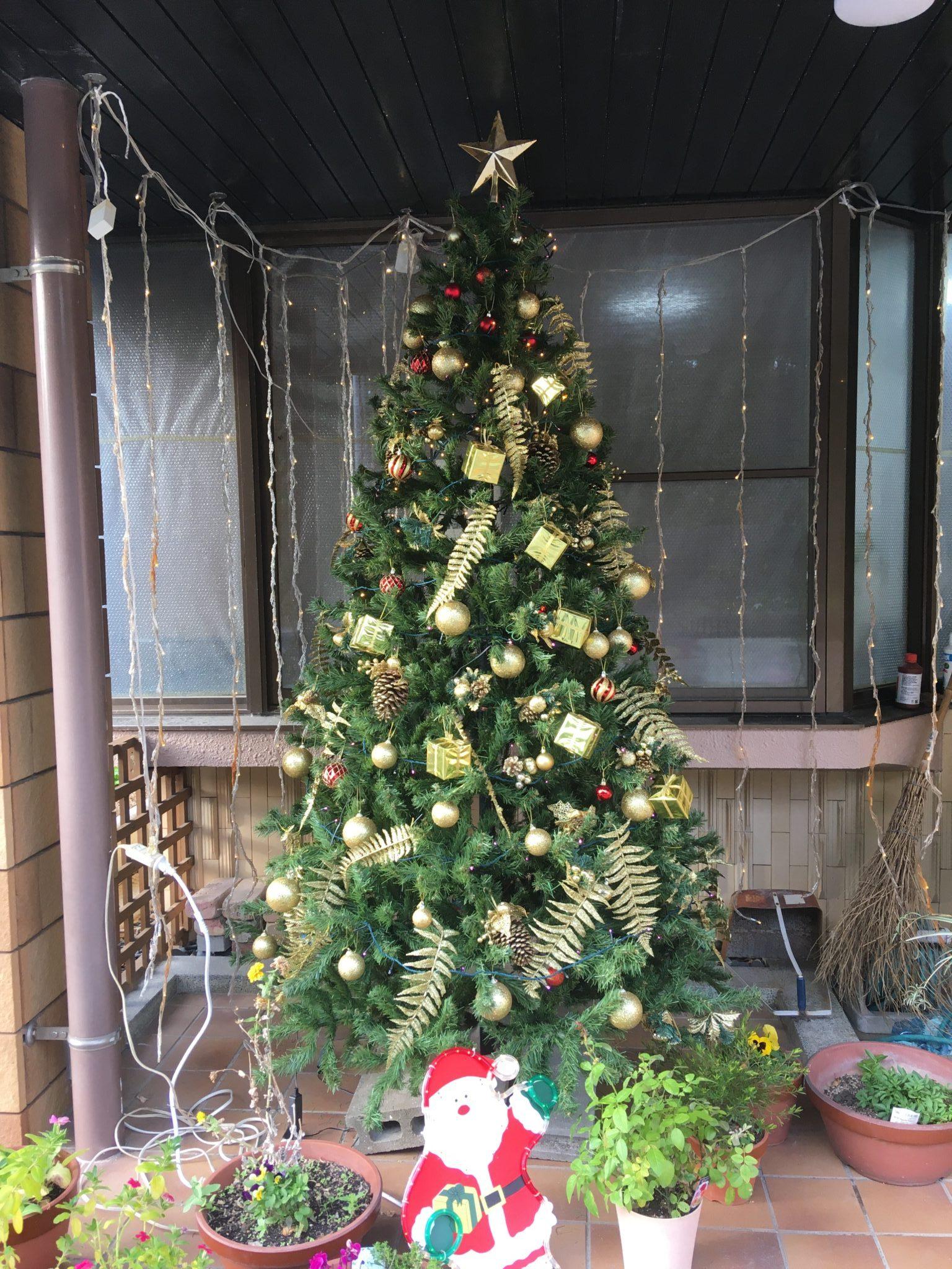 山内診療所にクリスマスツリーが出現しました🎄
